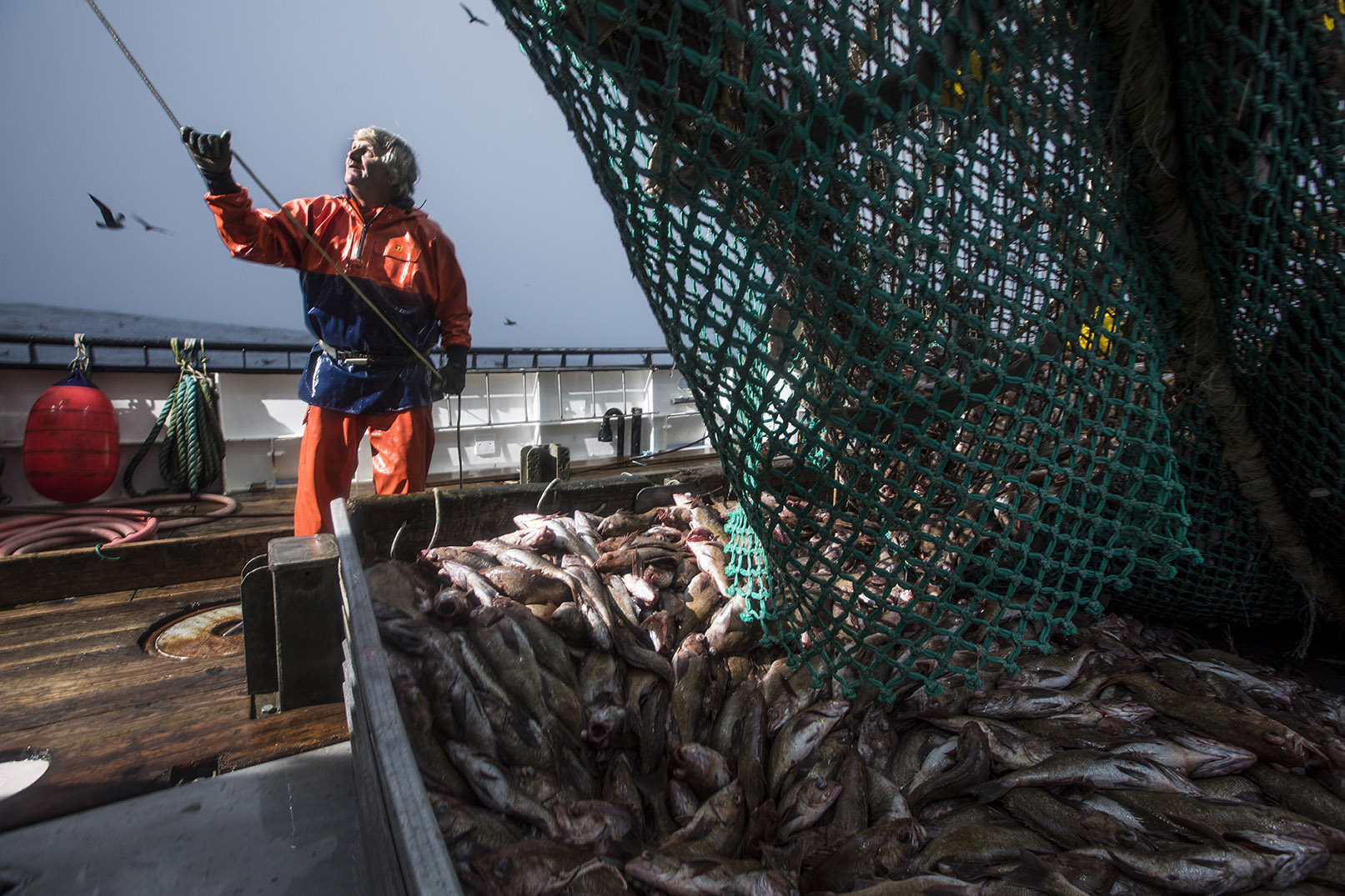 Seafood Industry Harvests Success with Ongoing Pilot Program