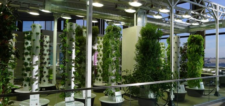 urban gardening growth
